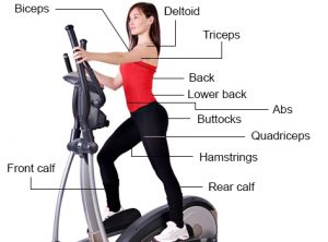 Elliptical machine muscles worked